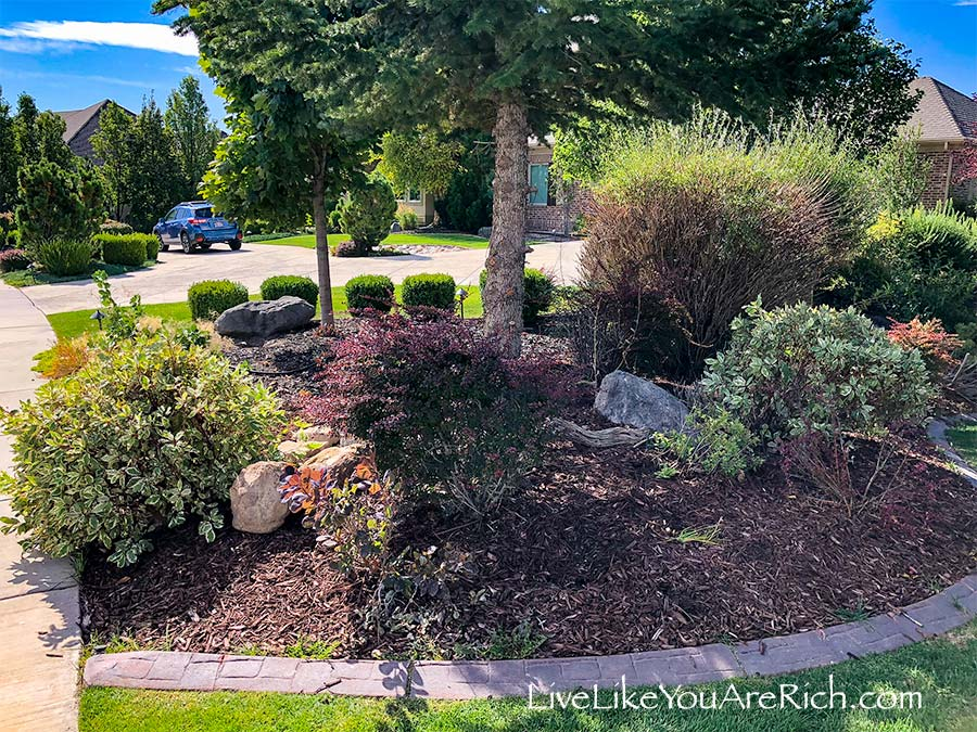 Stray weeds Maintenance-Free Weedless Flower Beds in 10 Steps