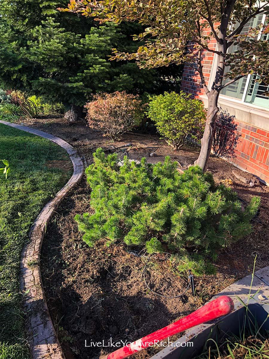 Weeding yard Maintenance-Free Weedless Flower Beds in 10 Steps