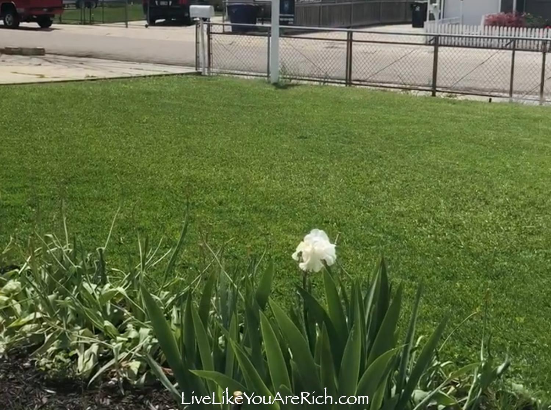 Front exterior home 2 lawn after fertilize